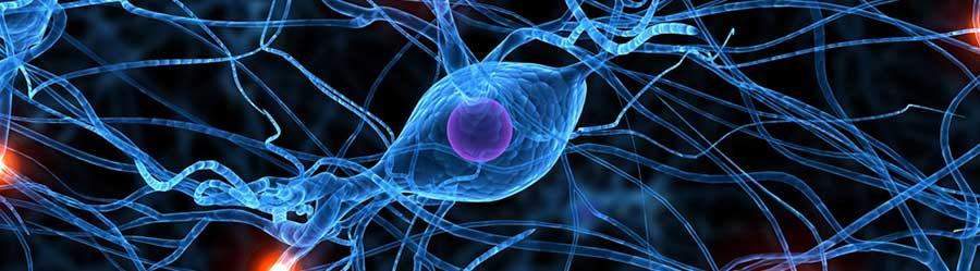 Estudios en Neurociencias y Sistemas Complejos (ENyS)